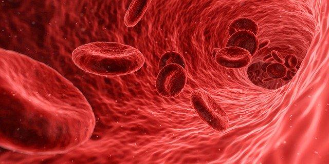 Lykon Erfahrung - Rote Blutkörperchen in den Adern