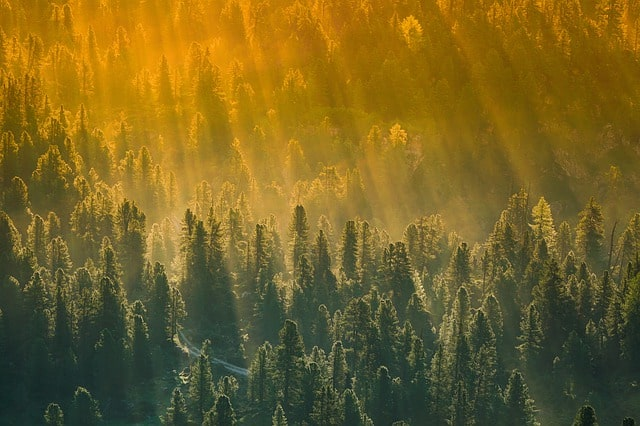 Primal State Natur