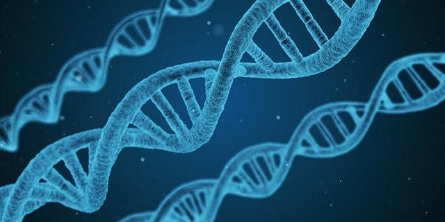Gesunder Darm Genetik